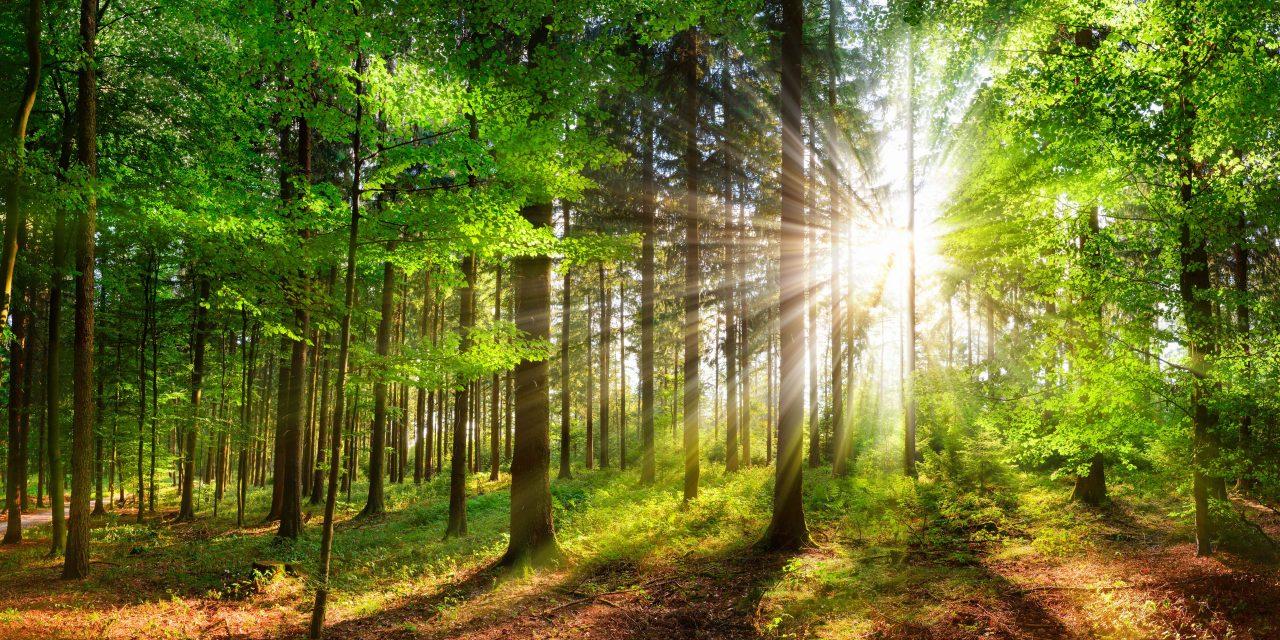 Voor onze natuur | Het groenbeleidsplan