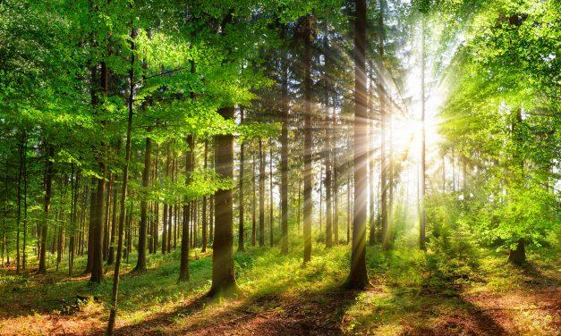 Het grote belang van de natuurontwikkeling in Nederland