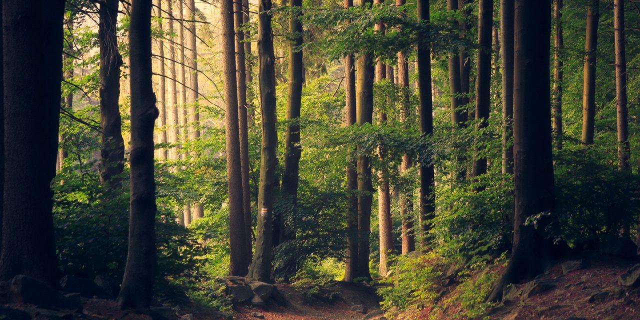 Advies voor een Natuurbeheerplan